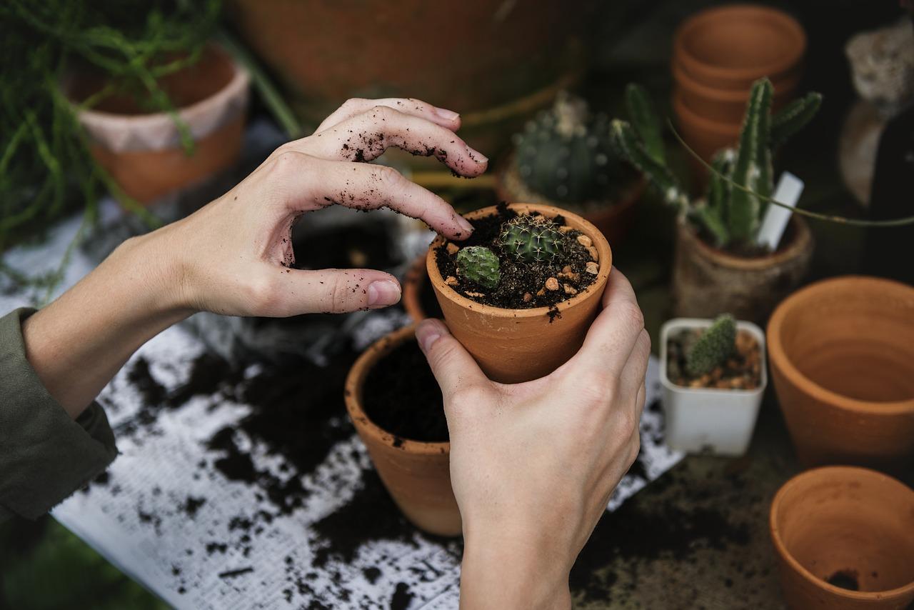 W sklepach ogrodniczych